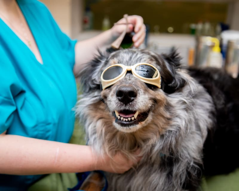 Cold Laser Therapy, Gilbert Veterinarians